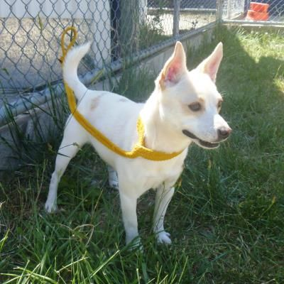 Animal Profile Fergus Losing A Dog Animals Chihuahua
