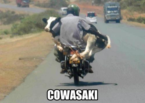 Mootorcycle Funnies Pinterest Zvierata And ľudia