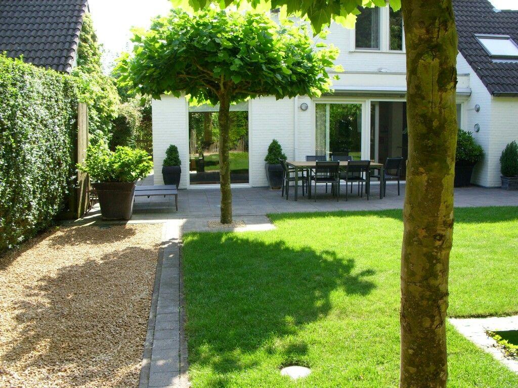 Esos arbolitos son geniales jardines so ados for Arbolitos para jardines pequenos