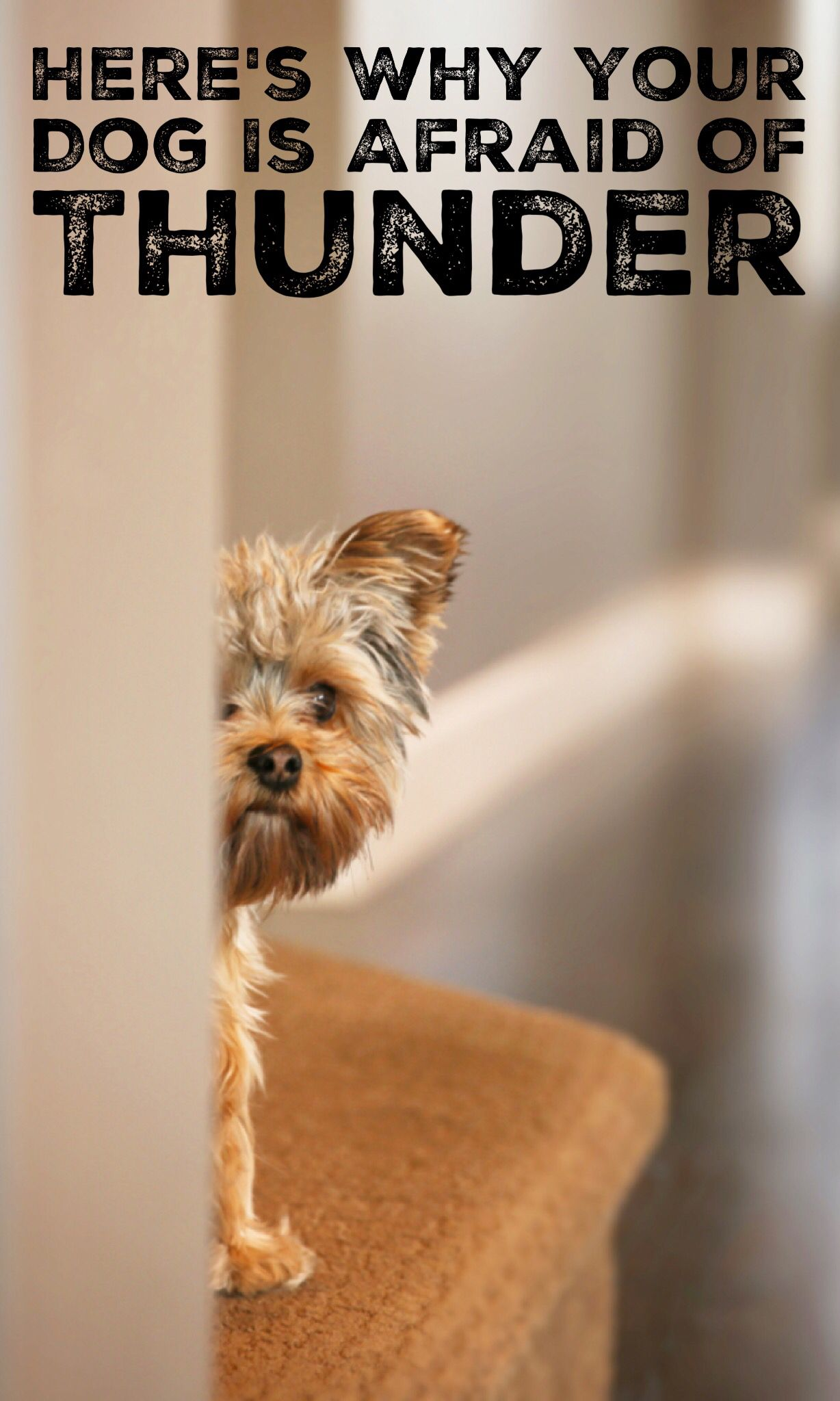 Does your dog (or cat!) have a thunderstorm phobia? We're