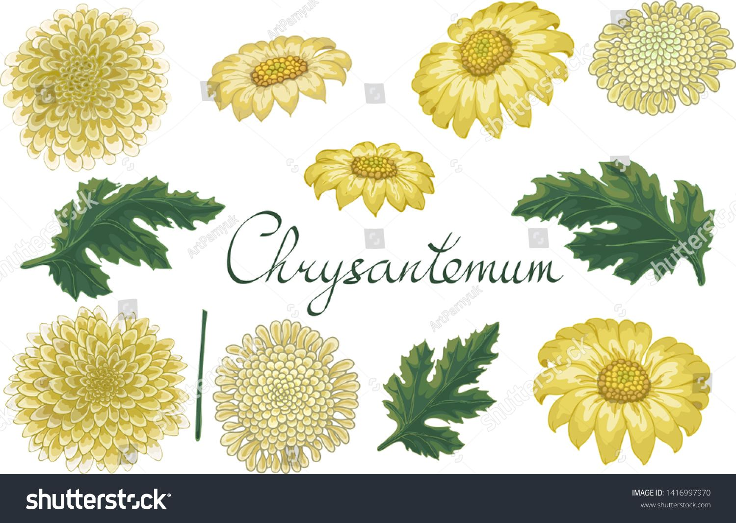 Vector Floral Illustration With Chrysanthemum Isolated Elements On A White Background Yellow Golden Daisy For Your F Floral Illustrations Illustration Floral