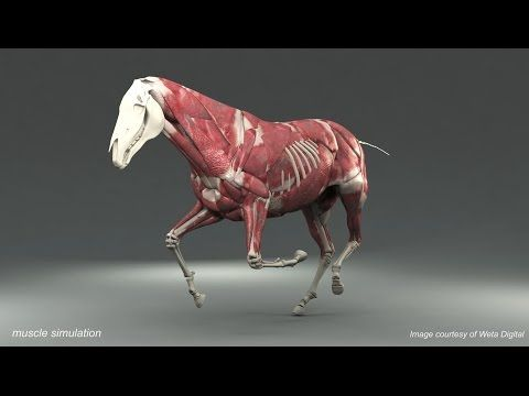Weta Digital Horse FEM Simulation  Horse is on left lead  That is