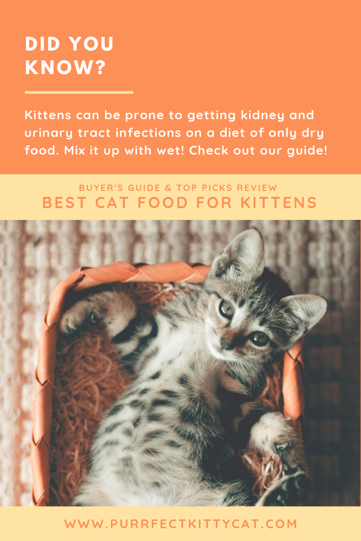 Check Out Our In Depth Guide On How To Feed You High Energy Fur Balls Kittens Kittens Catfood Cats With Images Cat Food Best Cat Food Kittens