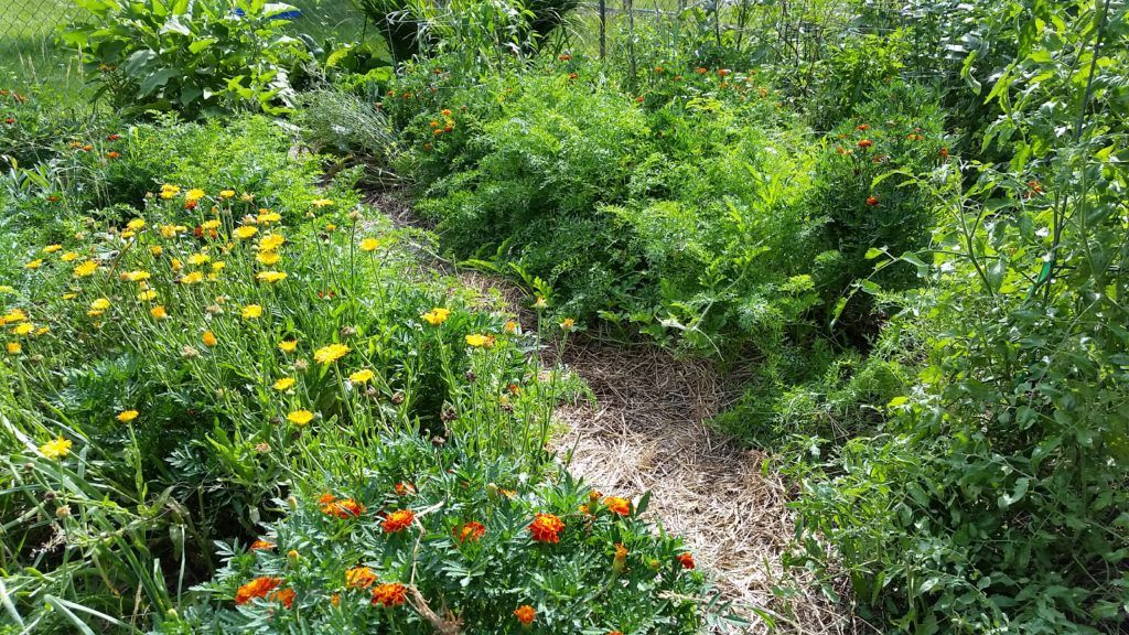 An Introduction to Herbal Actions | Edible landscaping ...