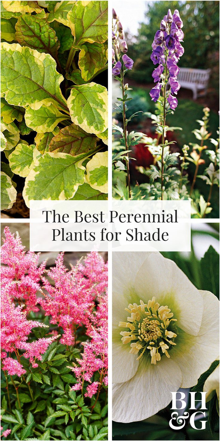 Best Perennials For Shade Pretty Flowers Toad And Perennials
