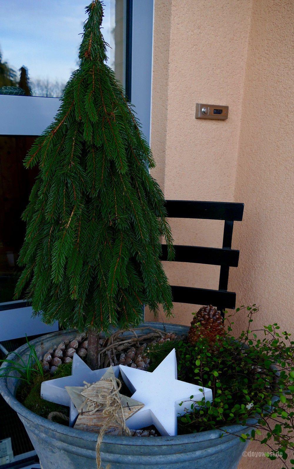 b ume aus tannenzweigen binden basteln pinterest tannenzweig weihnachten und baum. Black Bedroom Furniture Sets. Home Design Ideas