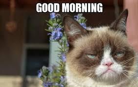 Good Morning Meme Google Search Grumpy Cat Grumpy Cat Humor Cats