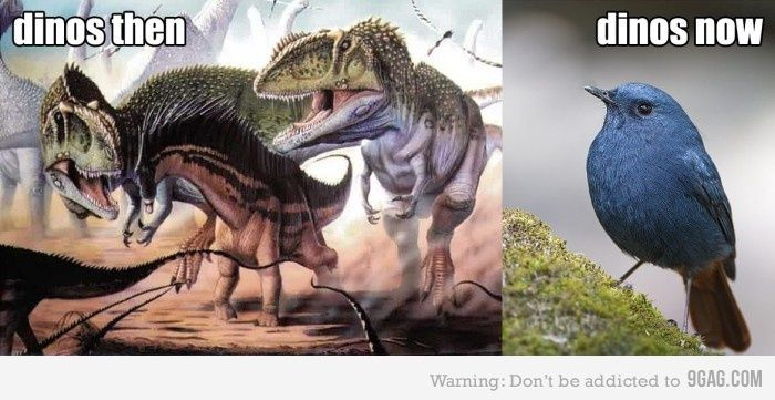Dinosaurs, wtf happened?