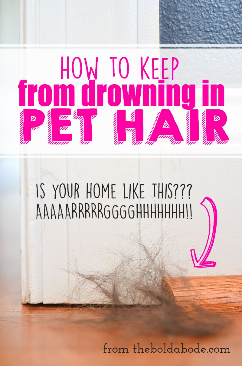 How to Keep From Drowning in Pet Hair |
