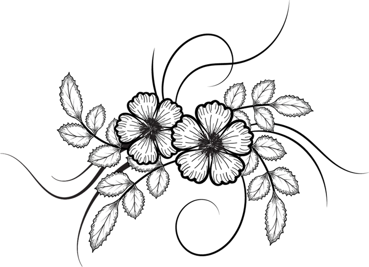Flowers, Vector Drawing Png