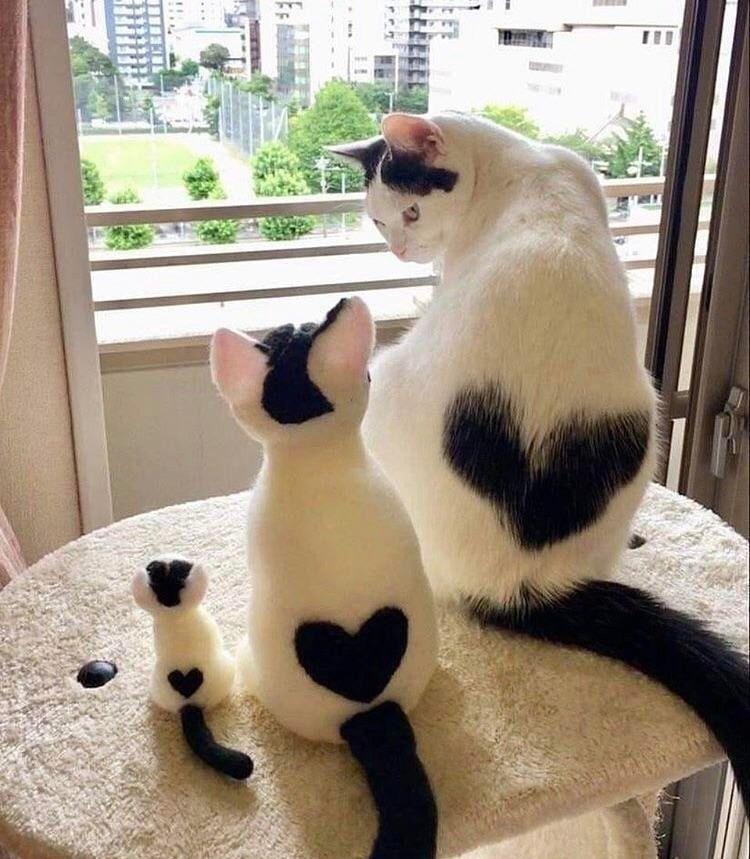 Big Heart Medium Heart Tiny Heart Baby Animals Super Cute Cute Cats Cute Baby Animals