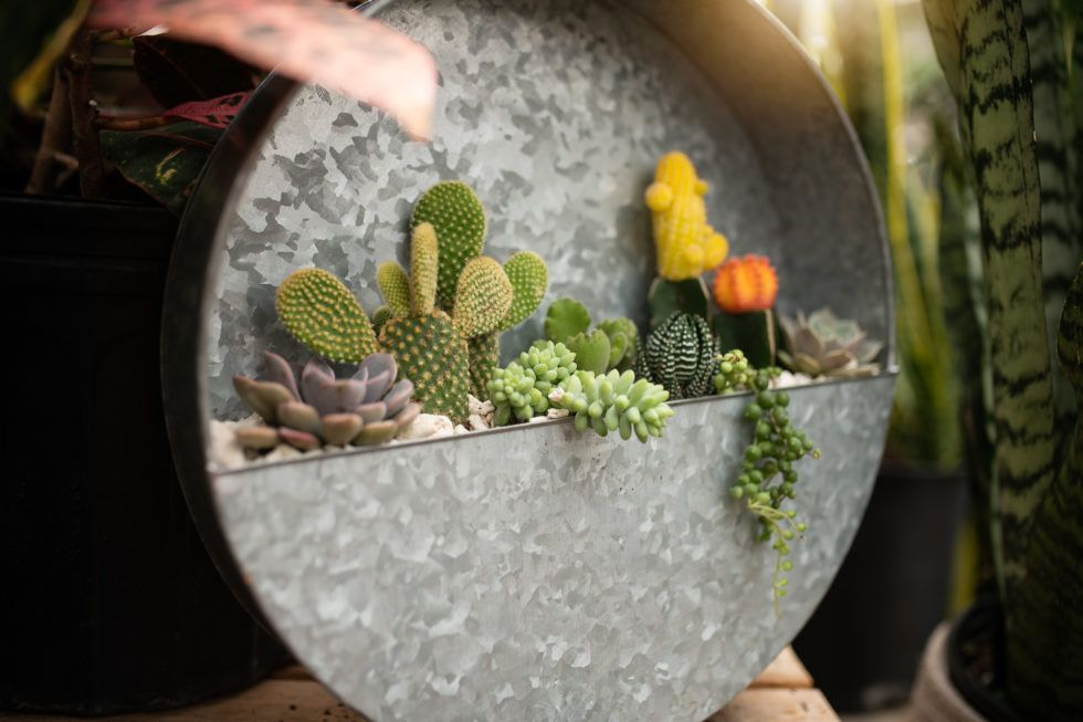 Sonoran Desert Circle Succulents In Containers Succulents House Plants Decor
