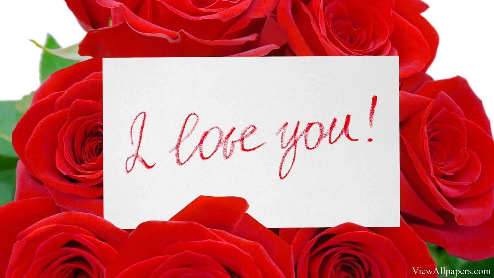 I love you red roses flowers hd wallpapers happy