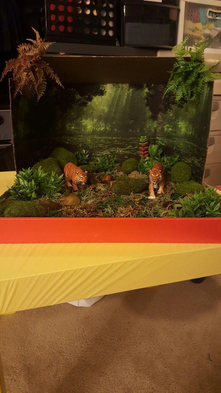 Kids Diorama With Details: Diorama Kids, Tiger