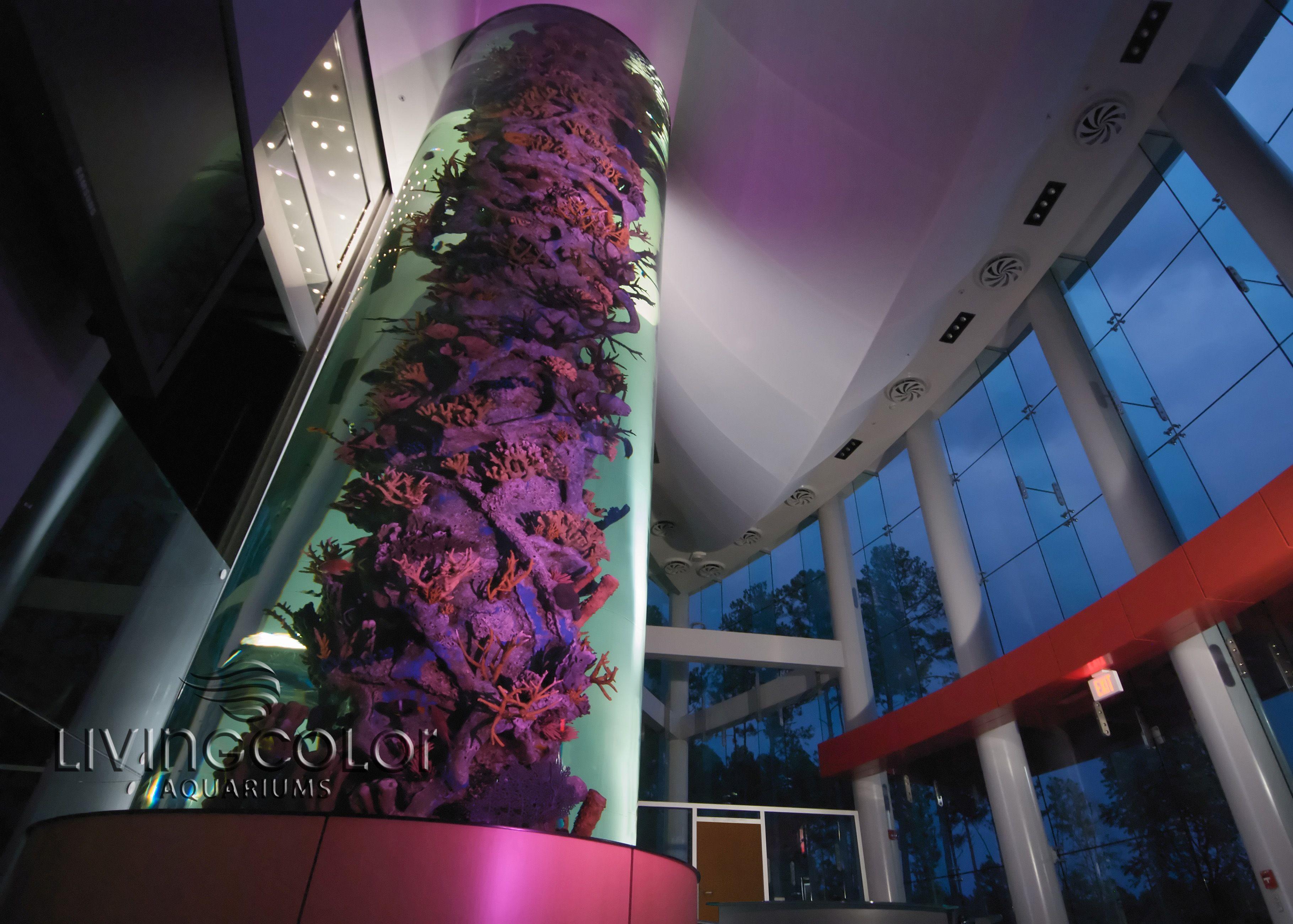 Living color aquarium fish tank kings - Living Color Aquariums Rainforest Cafe See More 900 Gallon Cylinder Tank