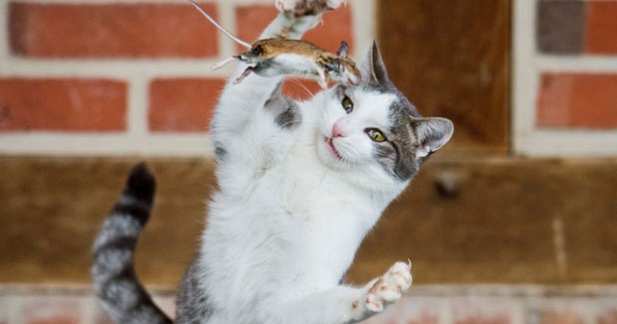 O pulo do gato.