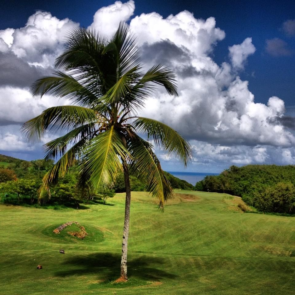 Golf Puerto Rico Stay with us in our hostel 🌴. Enjoy the