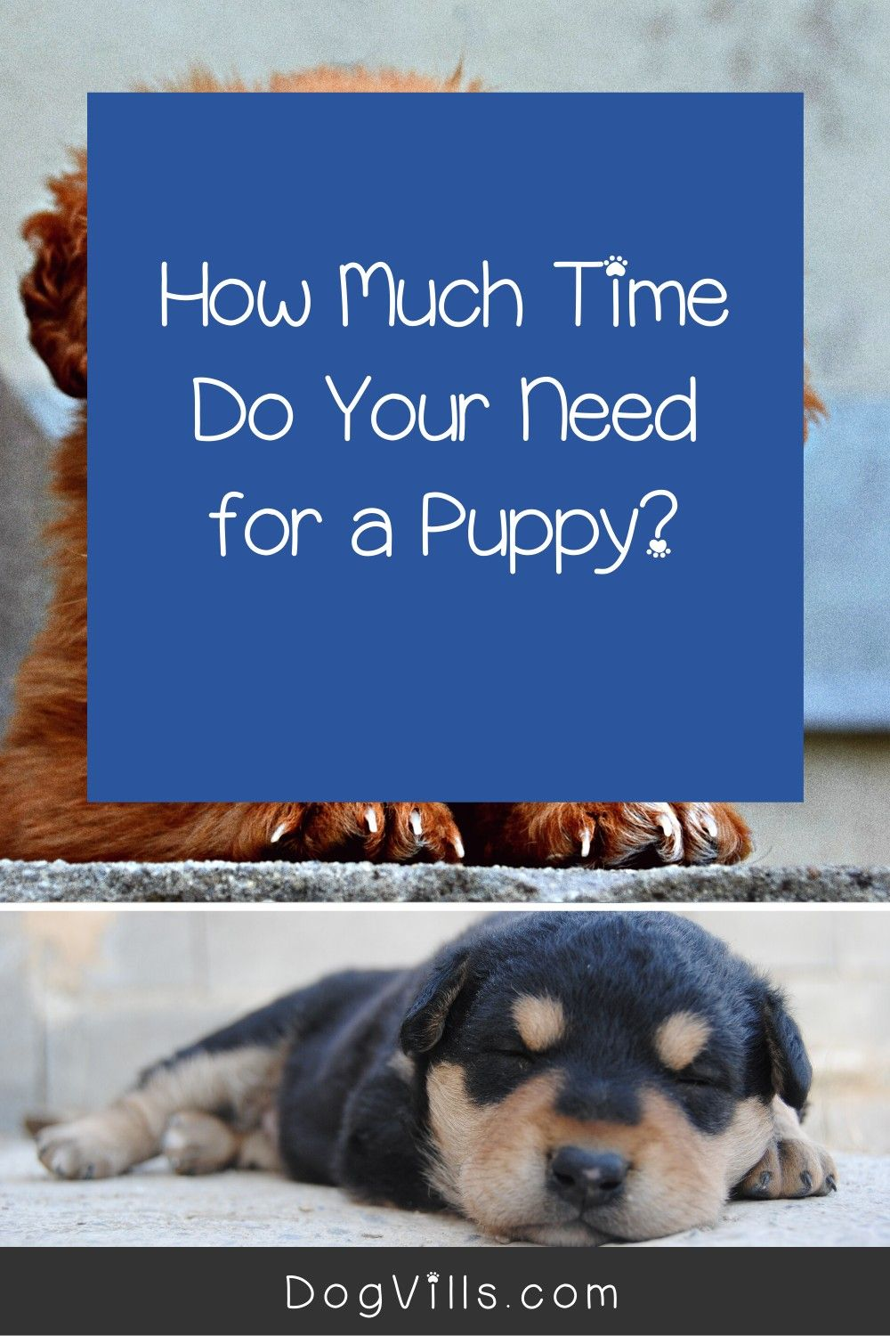 How much attention do puppies need a day working dogs