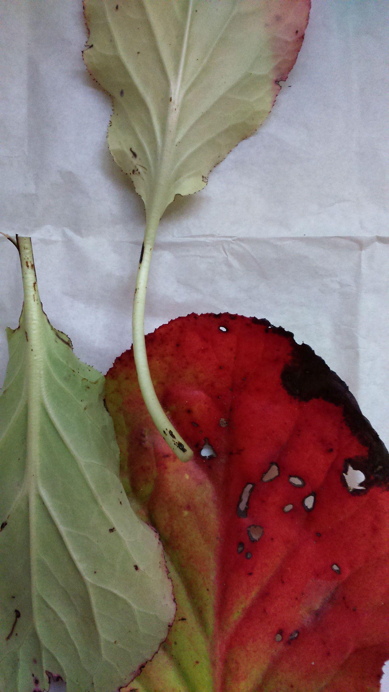 Autumnal contours IV. Photo credit: Paola De Giovanni