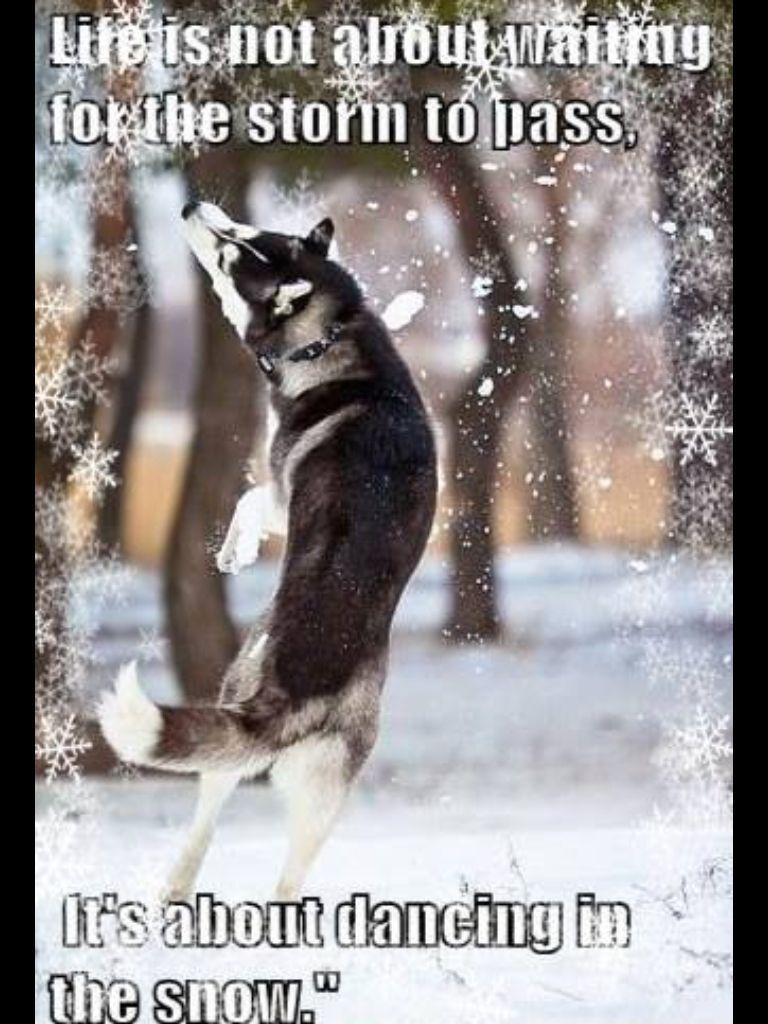 Siberian Husky Puppy Playing In The Snow Description From