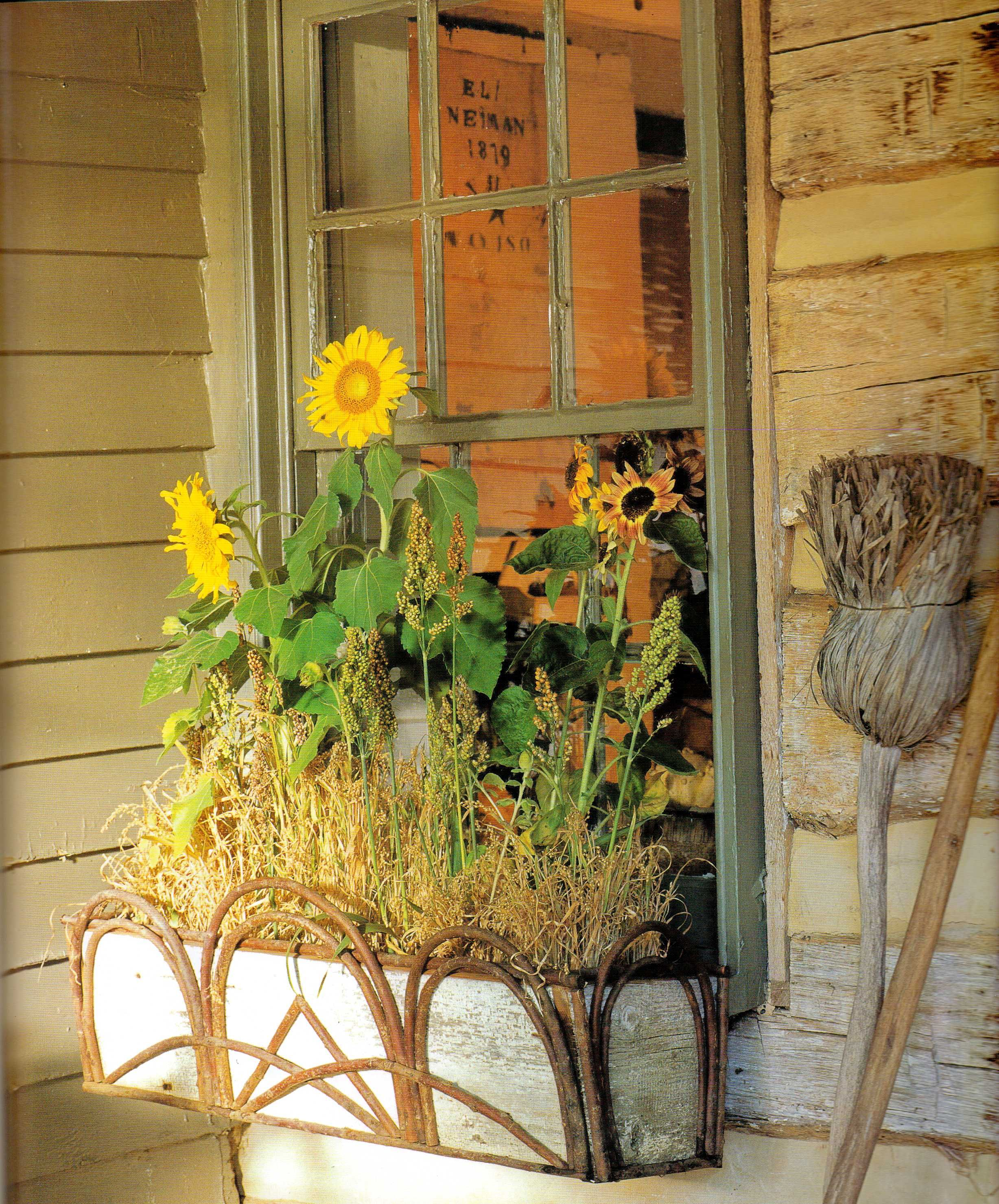 .sunflower window box.