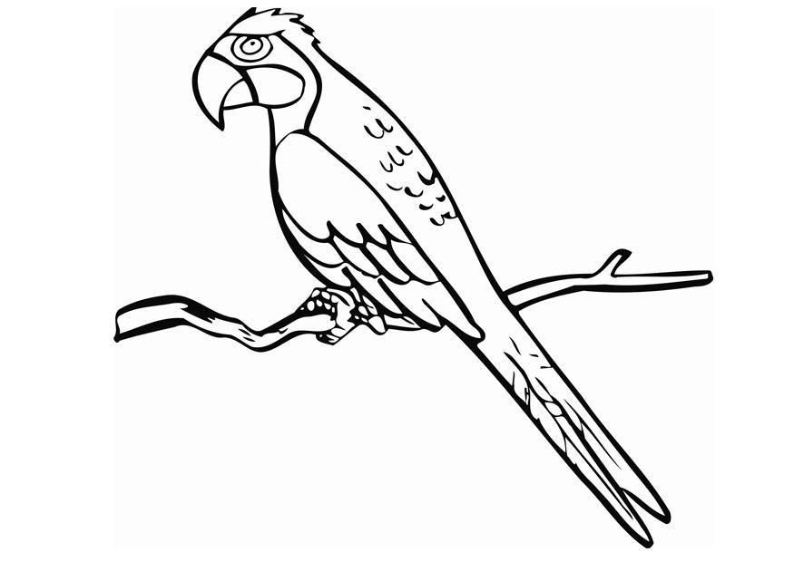 ausmalbilder papagei ara | ausmalbilder | Pinterest | Ausmalbilder ...