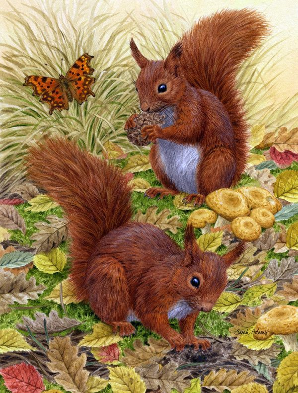 Red Squirrels Flag Canvas House Size ASA2133CHF