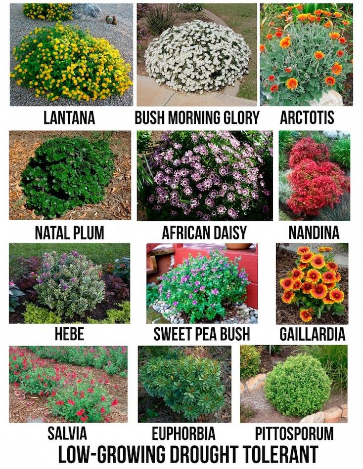 Creative Landscape Ideas With Big Impact Garden Shrubs