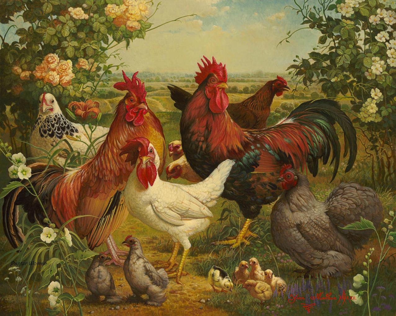 Картинка петух курица