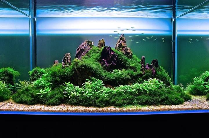 Superior Mountain Aquascape