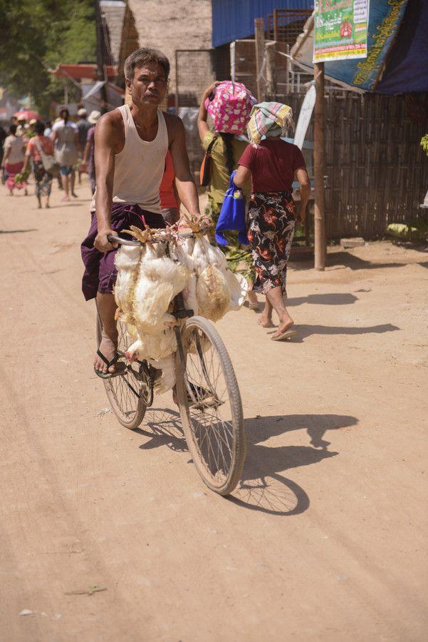 Pollos en bicicleta, Birmania