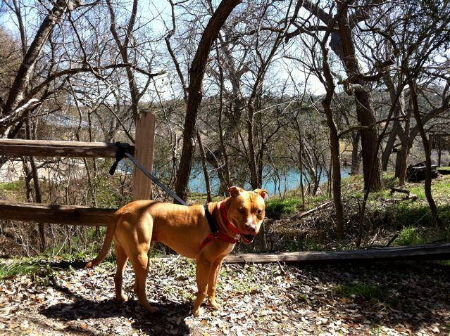 Adopt William On Animal Help Animals Dogs