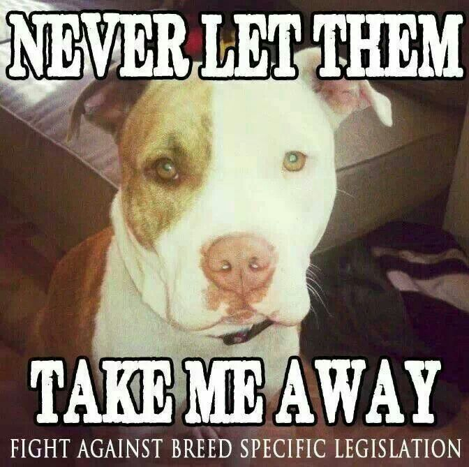 Breed Specific Legislation Is Ridiculous There Are No Bad Breeds
