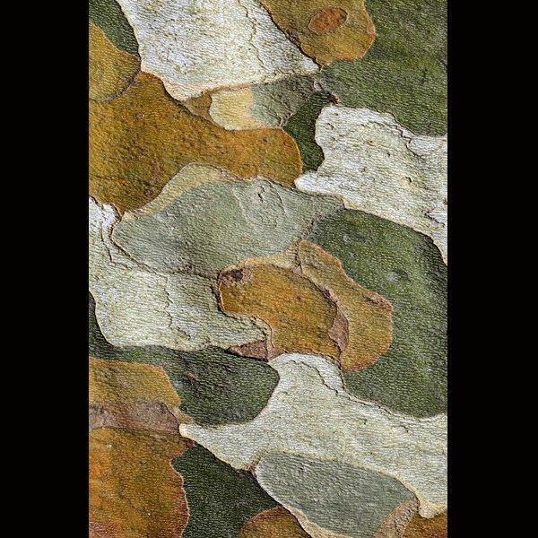 l 39 corce en puzzle du platane by c dric pollet le nom de l 39 artiste est nature. Black Bedroom Furniture Sets. Home Design Ideas