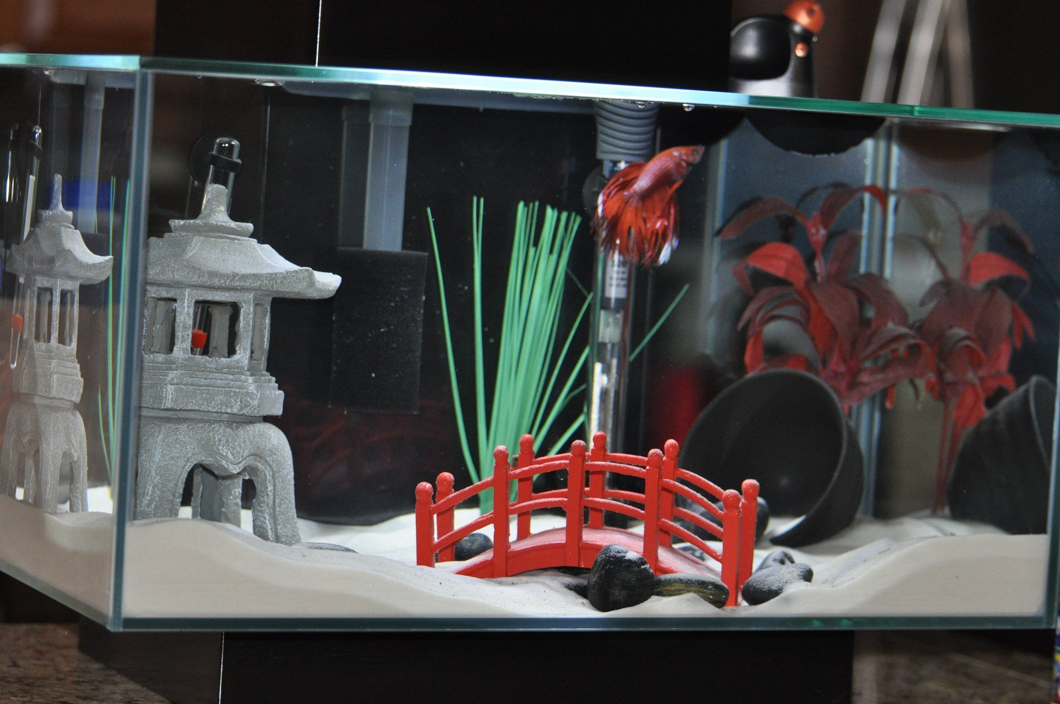 #goldfish #gallon #themed #asian #tank #tank #my10 Gallon Tank: My Asian Themed Goldfish Tank - 1321...