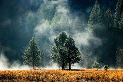 Лес, хвои, деревья, луг, туман