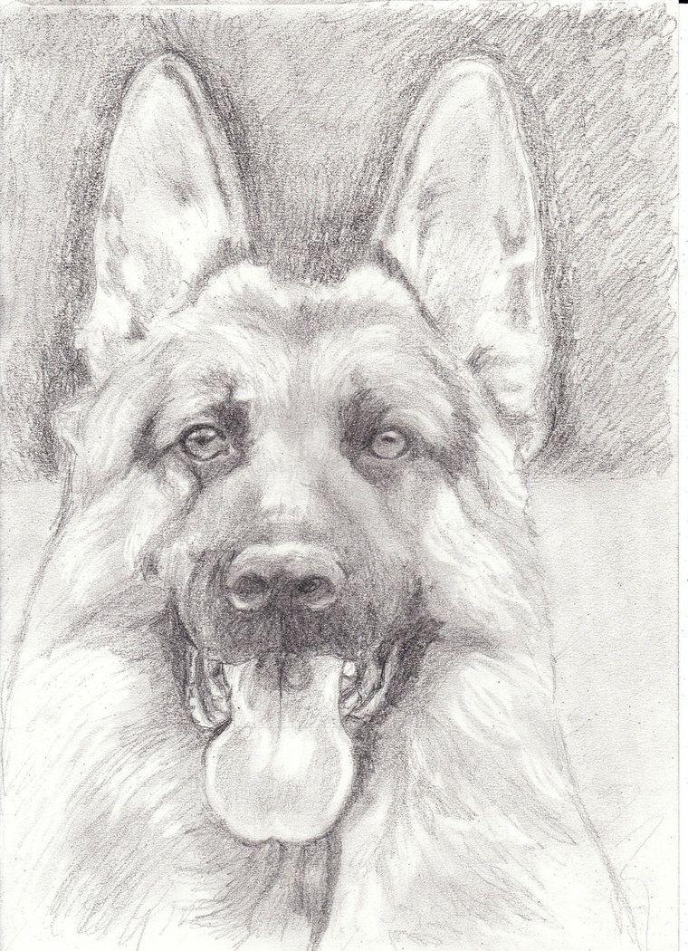 Pastor Aleman Draw Pesquisa Google Pintura Perro Silueta De Perro Dibujos De Perros