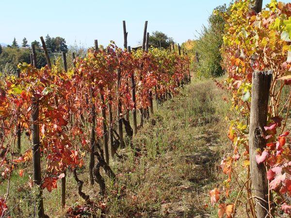Cascina Degli Ulivi, Piemonte