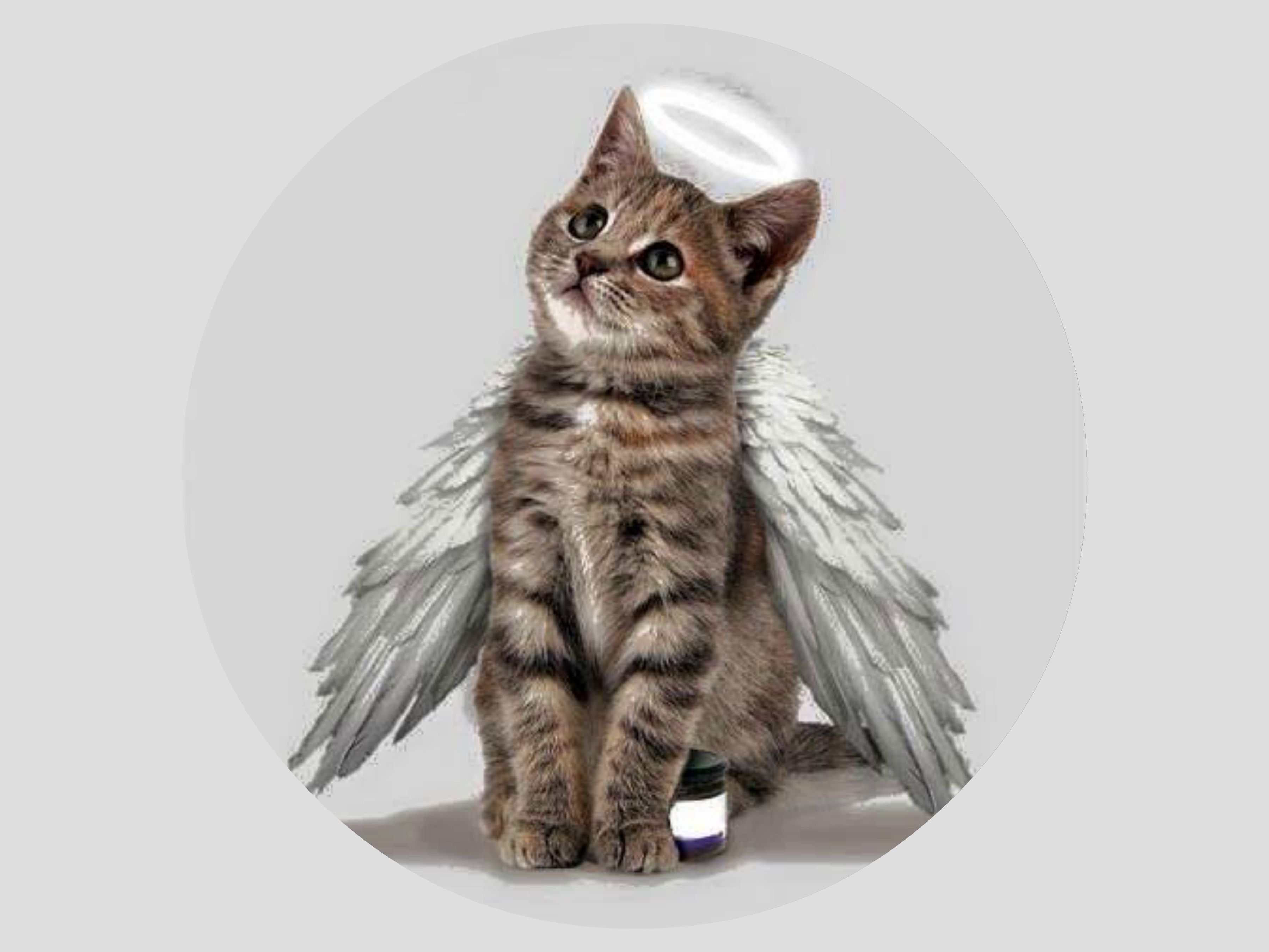 Pin By Gina On My Pizap Pets Cats Cats Angel Cat