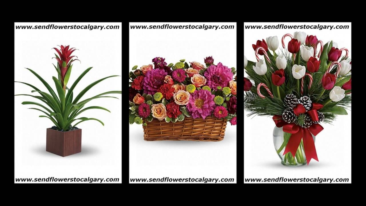 bunches florist edmonton https//calgaryflowersdelivery