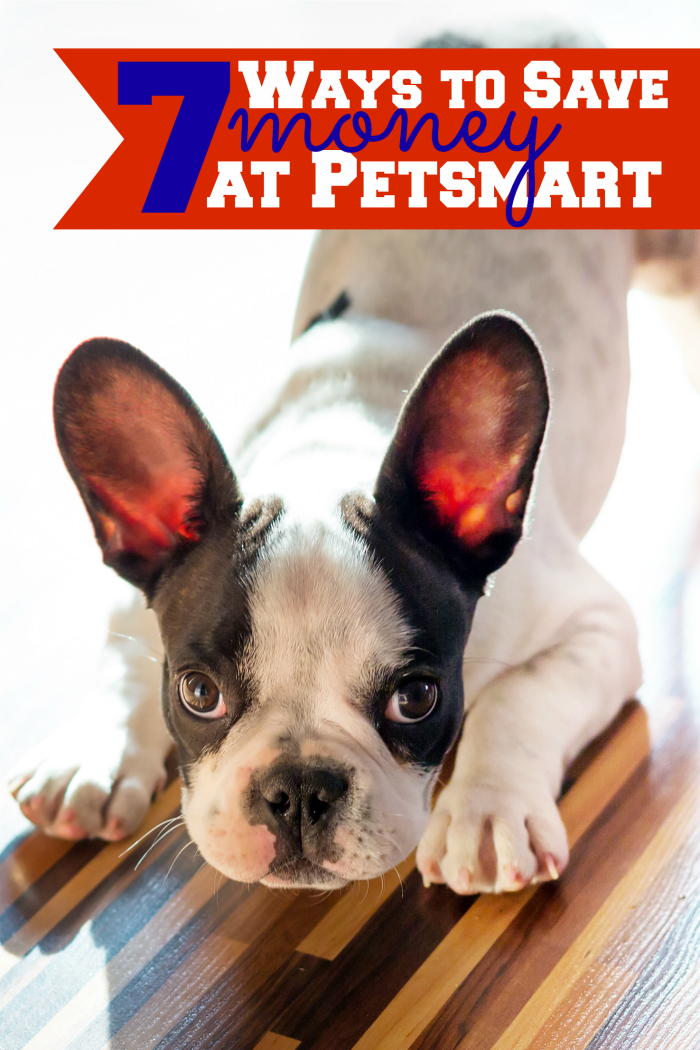 7 Ways To Save Money At Petsmart Dog Toys Best Pets For Kids Spoiled Pets