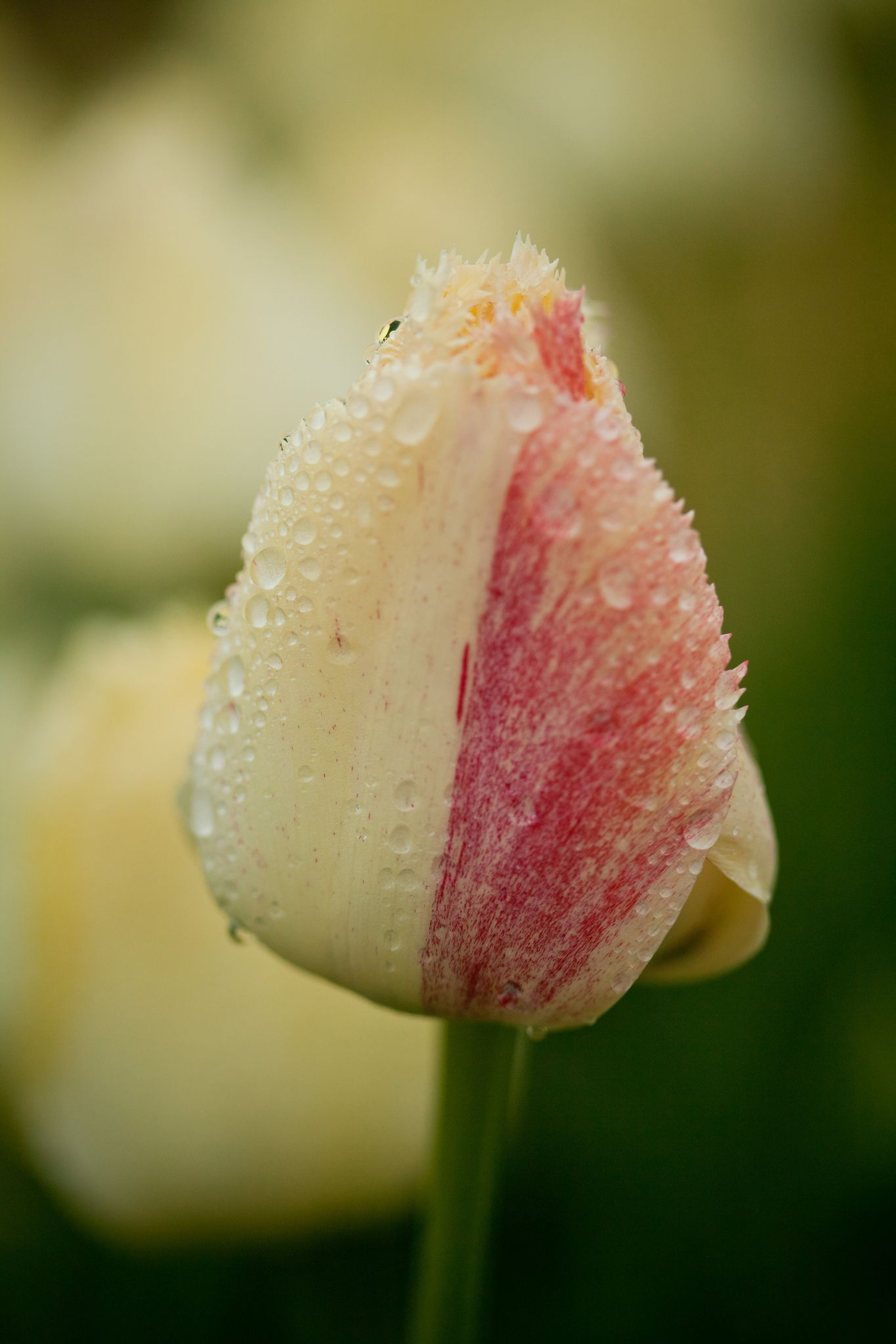 So Beautiful With Raindrops On Flowers Pinterest Flowers And