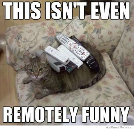 Quirky Quips Jokes So Bad You Can T Help But Laugh And Still Safe For Work Hubpages Funny Animal Pictures Cat Memes Cats