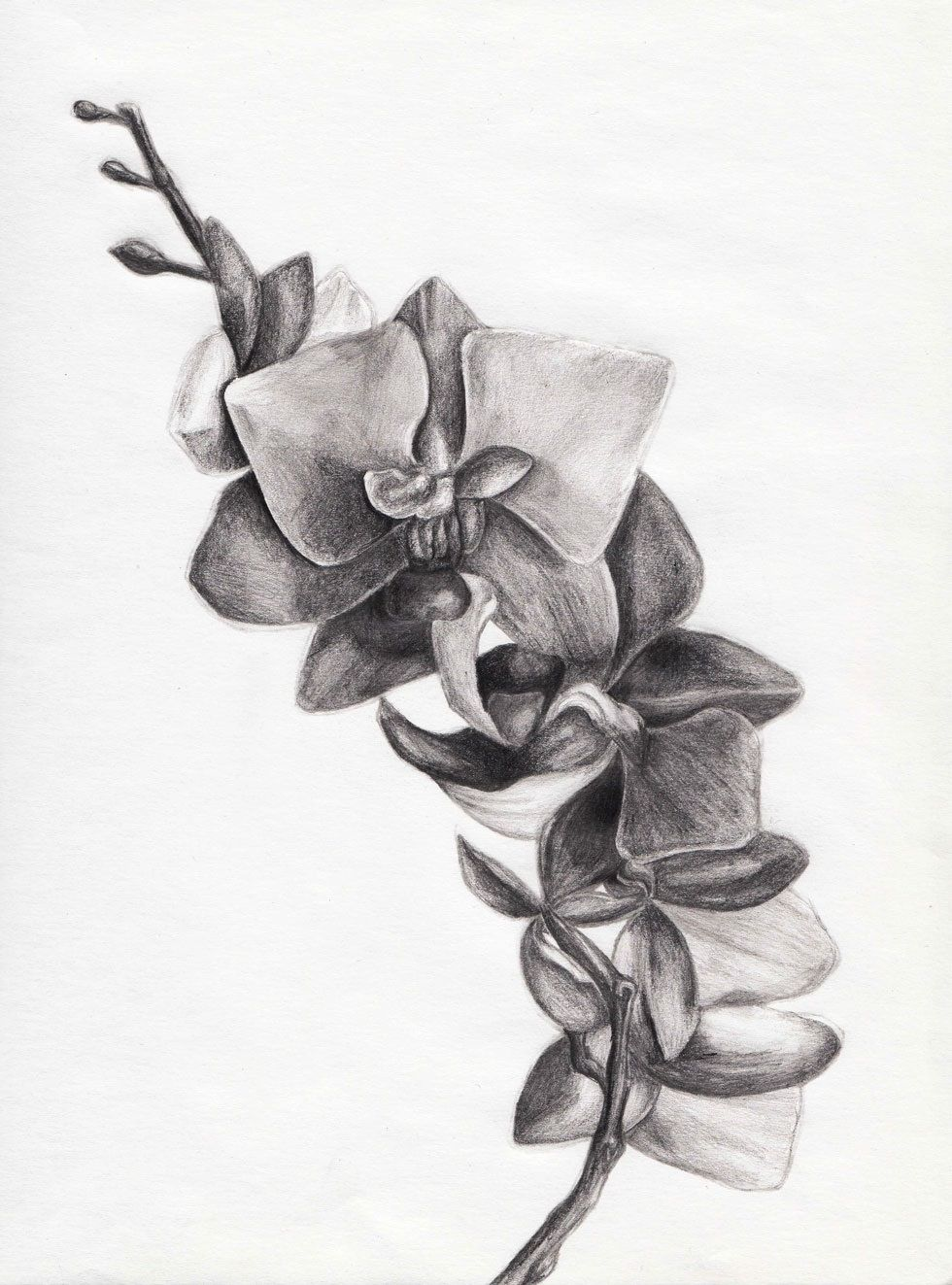 Orchid Sketch With Images Pencil Drawings Of Flowers Pencil