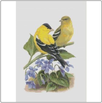 New Jersey - American Goldfinch and Violet