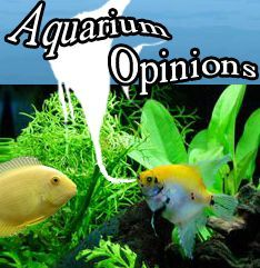 Photo of Check out the expert opinions. aquariumopinions….- Check o…
