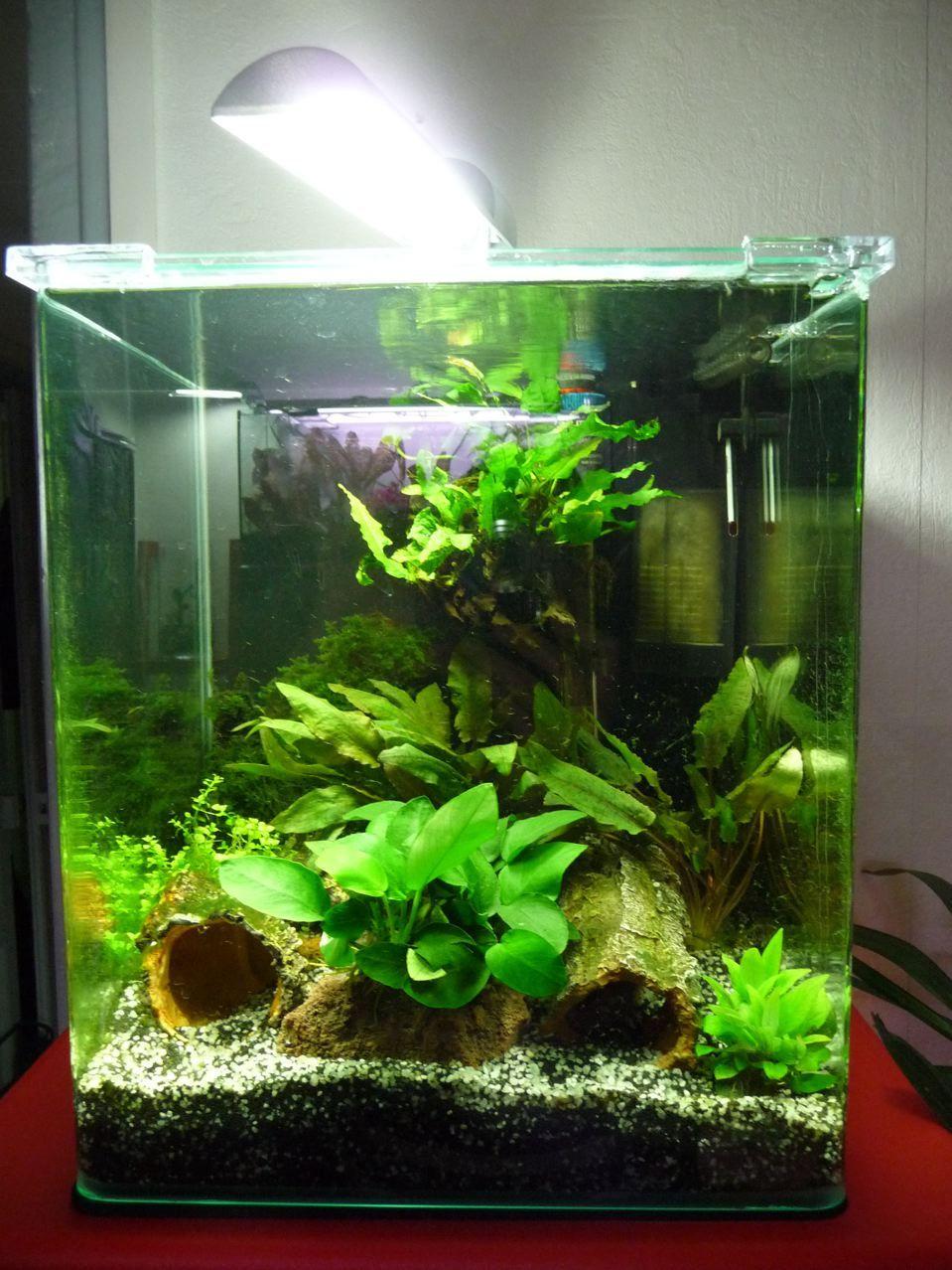 dennerle aquarium aquarium nano cube 30 litres dennerle. Black Bedroom Furniture Sets. Home Design Ideas