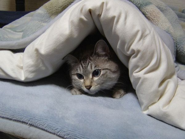 """""""A cat will allow you to sleep on the bed--no the edge."""" --Jenny DeVries"""