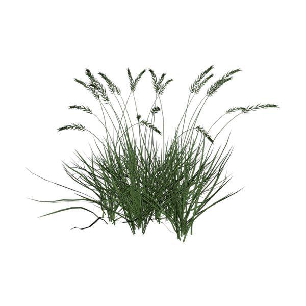 Wishingonastarr cu4cu native american for Vegetacion ornamental
