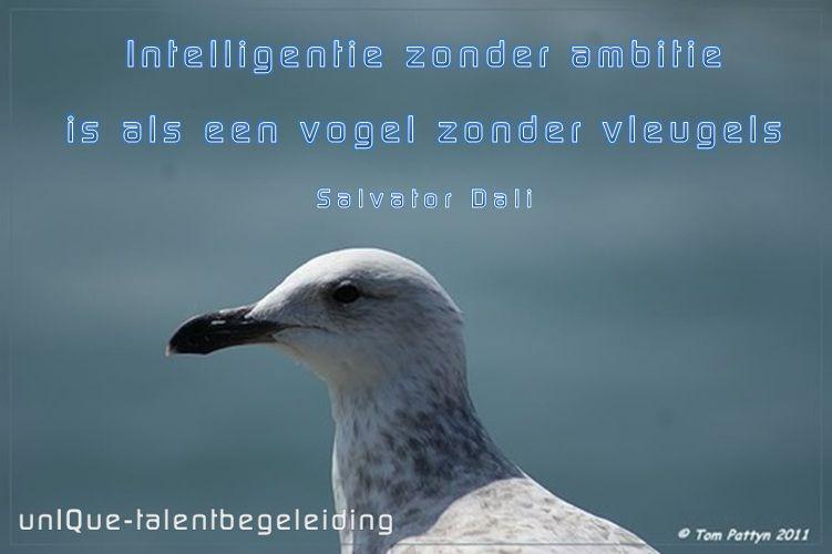 Intelligentie zonder ambitie ...